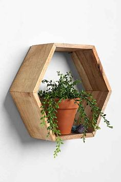 Honeycomb Wood Shelf from Urban Outfitters. Saved to Room Stuff/Useful. Shop more products from Urban Outfitters on Wanelo. Wall Mounted Wood Shelves, Wall Bookshelves, Wood Shelf, Shelf Wall, Wood Home Decor, Room Decor, Home Design, Design Ideas, Design Vase