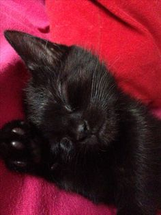 I really love little black kitties. Black cats and orange cats are the best. :)