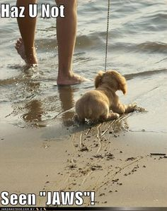 I have pictures of Ryder's first ocean experience and it's EXACTLY like this... he is forever terrified