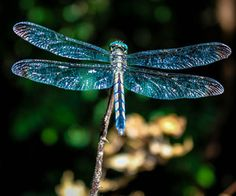 dragonfly | via Tumblr
