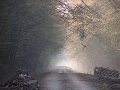 Forêt d'Épernay: Chemin forestier - France-Voyage.com