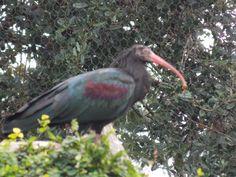 Jacksonville Zoo, Bird, Animals, Animales, Animaux, Birds, Animal, Animais