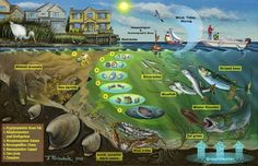 aquatic ecosystems - Google Search