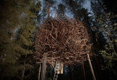 Tree Hotel | Hotbook #HOTbooking #HOTBOOK