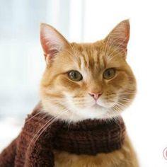 Beautiful Bob the Street Cat x