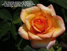 https://flic.kr/p/vFwKpG | Park of Roses_0042  http://stores.ebay.com/crazy-weekly-discounts