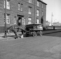 Glasgow in the & - Around The City Vol 2 Milk Industry, Horse Cart, Highland Cattle, Glasgow Scotland, Horse Drawn, West End, Garages, Vintage Pictures, Destruction
