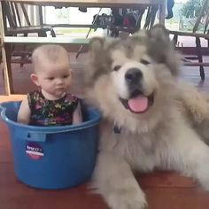 This fluff loves his human in a pot