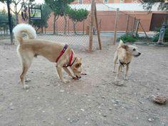 Juegos en el parque canino 10/16 Monty, Brown
