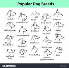 dogs breeds outline portraits, faces - Vektorgrafik : Hunderassen skizzieren Porträts, Gesichter Imágenes efectivas que le proporcionamos - Boxer Dog Tattoo, Dog Tattoos, Mini Tattoos, Small Tattoos, Dog Silhouette, Silhouette Portrait, Griffon Tattoo, Bullterrier Tattoo, Chien Jack Russel