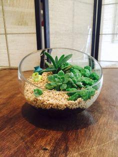 Terrarium para espacios pequeños Casaluna terrarium y mini jardines