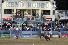 Photo of Reno Rodeo Cattle Drive