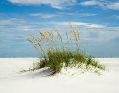 Pensacola Beach, Florida http://www.pensacolabeachfun.com/Images/PensacolaBeach06.jpg