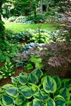 beautiful hosta landscape