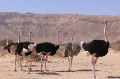 Hai-Bar Yotvata is a nature reserve in the southern Arava Valley, north of Eilat, which was established in order to foster the breeding of animals mentioned in the Bible and endangered desert species.