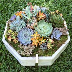 This incredible octagonal marble planter deserves an amazing display. 💞…
