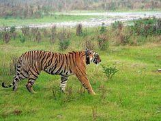 Keladevi Wildlife Sanctuary - in Rajasthan, India