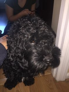 Monica CapozzielloDOGS- CT Lost/Found Dogs 1 hr near Bridgeport ·   This boy was found running on Madison Ave and Anton street in Bridgeport wearing a red collar , no tags !! Please share to find his owners ... 203 913-8449