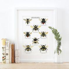 British Bees Illustrated Giclée Print