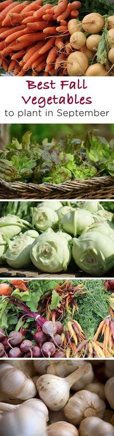 Best Easy to Grow Fall Vegetables to Plant in September#easy #fall #grow #plant #september #vegetables Fall Vegetables To Plant, Roasted Root Vegetables, Growing Vegetables, Veggies, Growing Tomatoes, Fruit Garden, Edible Garden, Grow Banana Tree, How To Grow Bananas