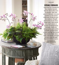orchid & fern display -- must recreate this!! (from martha stewart living)