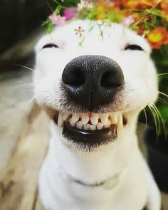 Things that make you go AWW! Like puppies, bunnies, babies, and so on. A place for really cute pictures and videos! Smiling Animals, Smiling Dogs, Animals And Pets, Baby Animals, Cute Funny Animals, Funny Animal Pictures, Dog Pictures, Funny Dogs, Random Pictures