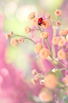 Dainty Little Flowers & a Lady Bug! Little Flowers, Beautiful Flowers, Pastel Flowers, Tiny Flowers, Bokeh Photography, Pretty Pastel, Amazing Nature, Mother Nature, Lady In Red