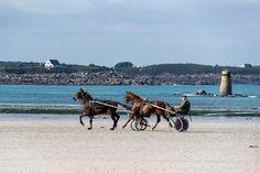 cheval trotteur au Dossen à Santec © Paul Kerrien  http://toilapol.net  Finistère Bretagne
