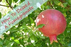 Not sure how to deseed a pomegrante? Karen to the rescue with this easy DIY kitchen hack! | Fit Bottomed Eats