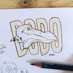 Dodo   #sketchbook #art #extinct #dodo #pencilsketch #pencil #instaart #artistsoninstagram