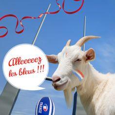 Coupe du Monde de Rugby #Soignon #Chèvre #Rugby