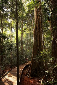 Lamington National Park, rainforest in south-east Queensland, Australia (by Tezza).