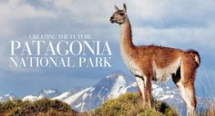 Conservacion Patagonica - the future Patagonia National Park. I did an internship at this park in Southern Chile for 4 months last fall. In Patagonia, I Want To Travel, Wanderlust Travel, Natural Wonders, Natural World, Outdoor Activities, Places To Go, Small Places, South America