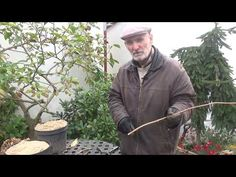 Propagation of Hydrangea Paniculata, part 1 Hydrangea Paniculata, Propagation, Youtube, Plants, Flowers, Garten, Planters, Youtubers, Plant