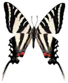 zebra print butterflies for Kaely's room!