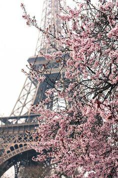 ⊱⚜ f r e n c h l o v e ⚜⊰.               Cherry blossoms in Paris