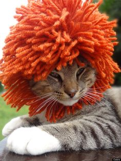 WTF an Afro for a cat, poor kitty, it will need therapy for the rest of it's nine lives.