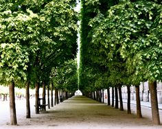 Palais Royal Photography Print - Green Tree Photograph - Symmetry in Paris. Paris photography print from Palais Royal. Peaceful, soft and soothing. Leafy shade and emerald green. Beauty of Paris in its perfect symmetry. Elegant and affordable decor for your home. Available in a variety of standard sizes and finishes. Sold unframed and does not include mat.