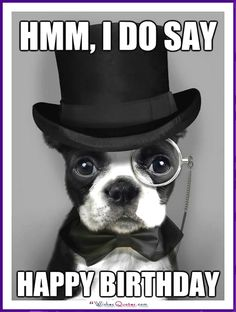 Funny Dog Birthday Meme: Hmm, I do say happy birthday.