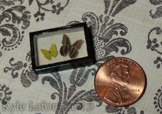 1:12 Steampunk Dollhouse Butterfly Display - Owl Eye & Tailed Sulphur Butterfly