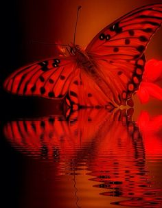 ~~ flow and glow by Thomas Alexander ~~ butterfly and reflection~~