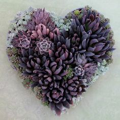 Absolutely beautiful purple potted succulents in heart shape!