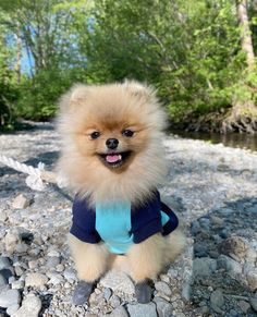 We're loving @itsmochithepom in our bamboo crew sweater! How often do you go on cool adventures? ⬇️ . . . . . #thesharperbarker #pomsofig #shopsmall #dogsweaters #petbrand #dogbrand #bamboohooodie #dogsofinsta #fourleggedfashion #doglife #furbaby #dogstagram #puppylife #dailydog #madeinyvr #dogparents #adventuredog #mykidshavepaws #puppytales #dailybarker #ruffpost #bestwoof #dailyhounds #thedogsofvancouver #yvrdogs #dogsofcanada #buzzfeedpets Dog Branding, Dog Hoodie, Dog Sweaters, Four Legged, Dog Life, Best Dogs, Fur Babies, Bamboo, Puppies