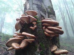 Jak w zaczarowanym lesie.... #Podkarpacie #Dwernik #Bieszczady/ #Poland #amazing #nature