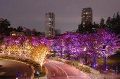 東京ミッドタウン さくら通りライトアップ2010  Illuminations along the Sakura street at The Tokyo Midtown