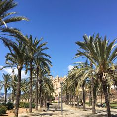 Palma de Mallorca looking splendid in spring sunshine.  Palma's cathedral which took over two centuries to complete now has a roof too terraces tour. . . . #palmademallorca #mallorca #majorca #architecture #city #history #mediterranean #travel #instatravel #passionpassport @turismoislasbaleares #globetrotter #balearicislands #spring #luxurynavigator