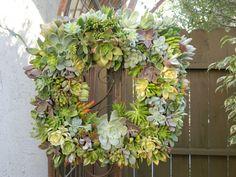 Succulent Wreath Square Succulent Wreath  Mother's by tobieanne, $90.00