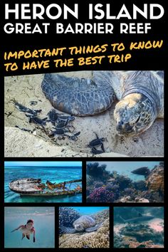 Heron Island: Things To Know For The Best Trip On The Great Barrier Reef