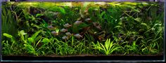 Layout 25 - Tropica - Tropica Aquarium Plants