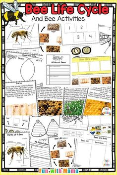 Tips For Just A Second Wedding Ceremony Anniversary Reward Bee Life Cycle, Bee Theme Classroom, Insect Study Bee Activities, Subtraction Activities, Kindergarten Activities, Educational Activities, Letter B Crafts, Bee Life Cycle, Bee Facts, Bee Pictures, Bee Book